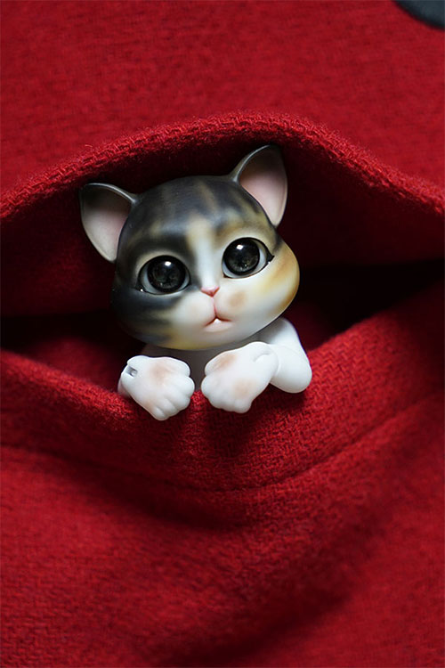 bubblepet_cat_molly_500750_08